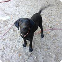 Adopt A Pet :: Duke - Groveland, FL