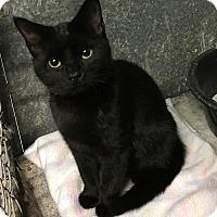Adopt A Pet :: April - Loogootee, IN