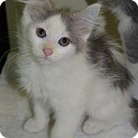 Adopt A Pet :: Star - Michigan City, IN