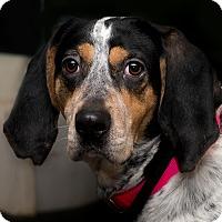 Adopt A Pet :: Daisy - Westfield, NY