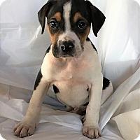 Adopt A Pet :: Mason - Mooresville, NC
