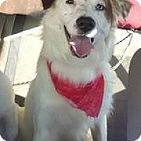 Adopt A Pet :: Waylon - Savannah, GA