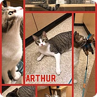 Adopt A Pet :: Arthur - Arlington/Ft Worth, TX