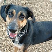 Adopt A Pet :: Stella - Baltimore, MD