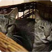 Adopt A Pet :: Arnold & Brad - Pasadena, CA