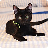 Adopt A Pet :: Scotty - Xenia, OH