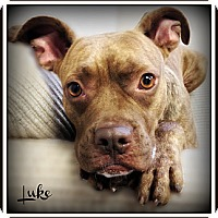 Adopt A Pet :: Luke - Pascagoula, MS