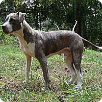 Adopt A Pet :: Thunder ($200 fee) - Brattleboro, VT