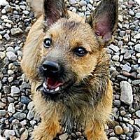 Adopt A Pet :: Bogie - Golden Valley, AZ
