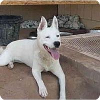 Adopt A Pet :: Aspen - Gilbert, AZ