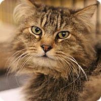 Adopt A Pet :: Seymour - Sacramento, CA