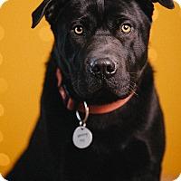 Adopt A Pet :: Camden - Portland, OR
