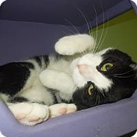 Adopt A Pet :: Paddy - Medina, OH