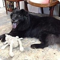 Adopt A Pet :: Alvin - Ocean Ridge, FL