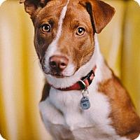 Adopt A Pet :: Gaela - Portland, OR