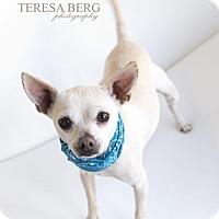 Adopt A Pet :: Rue - McKinney, TX