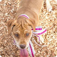 Adopt A Pet :: Hope - $250 - Seneca, SC