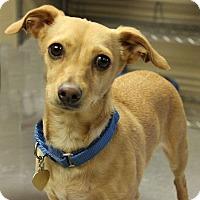 Adopt A Pet :: OLIVER - Hurricane, UT