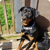 Adopt A Pet :: Sheeba - Cuddebackville, NY