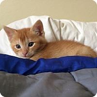 Adopt A Pet :: Blaze - San Jose, CA