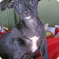 Adopt A Pet :: Trix - Yuba City, CA