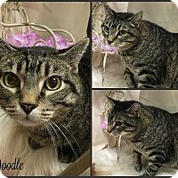 Adopt A Pet :: Doodle - Joliet, IL