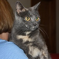 Adopt A Pet :: Tink - Windham, NH
