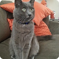 Adopt A Pet :: Smokey - Round Rock, TX