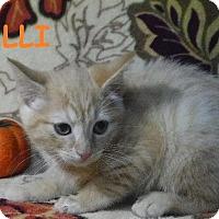 Adopt A Pet :: Halli - Batesville, AR