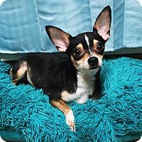 Adopt A Pet :: Tito - Davie, FL