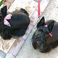Adopt A Pet :: Ruby & Pearl - Phoenix, AZ