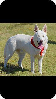 German Shepherd Dog Dog for adoption in Longview, Texas - Crow