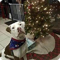 Adopt A Pet :: Toby formerly Hooch - Euless, TX