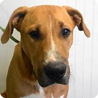 Adopt A Pet :: AA-Sabine - Tyler, TX
