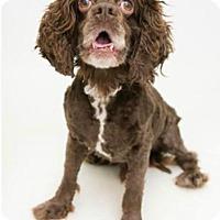 Adopt A Pet :: MATTHEW - Media, PA
