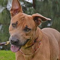 Adopt A Pet :: Keno - Altadena, CA