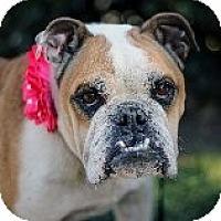 Adopt A Pet :: Gertie ADOPTED - Atascadero, CA
