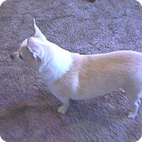 Adopt A Pet :: Luna Mae