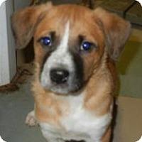 Adopt A Pet :: Trevor - Antioch, IL