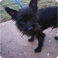 Adopt A Pet :: Taz - Arlington, TX