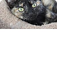 Adopt A Pet :: Picasso - El Cajon, CA