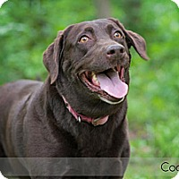 Adopt A Pet :: Coconut - Lewisville, IN