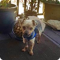 Adopt A Pet :: Herman - Los Angeles, CA