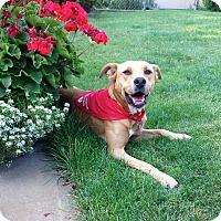 Adopt A Pet :: Daisy - Wilmette, IL