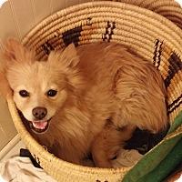 Adopt A Pet :: Peter O'Drool - Mount Gretna, PA
