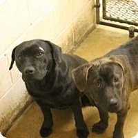 Adopt A Pet :: Maddie and Hoss - EXTREMELY URGENT! - Hagerstown, MD