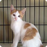 Adopt A Pet :: Richie - Island Park, NY
