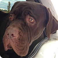 Adopt A Pet :: MOOSE - Pompton lakes, NJ