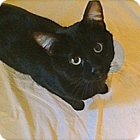 Adopt A Pet :: J.P. - O'Fallon, MO