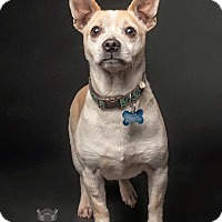 Adopt A Pet :: Rupert - Pitt Meadows, BC